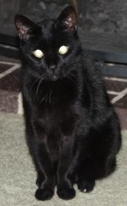 black cat maggie
